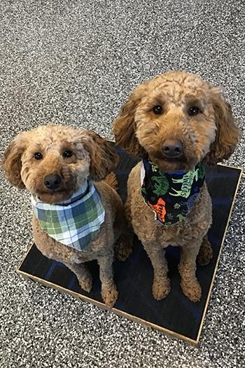 Dogs at Ankeny training graduation