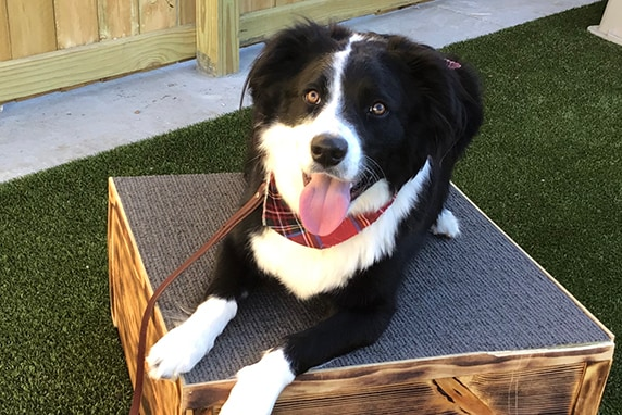 Dog at Ankeny Bark Avenue training graduation